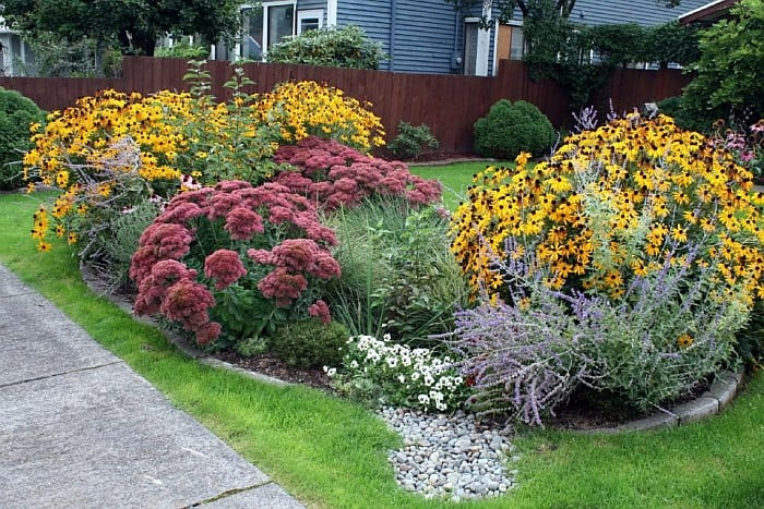 A rain garden on the front lawn with beautiful flowering plants in full bloom