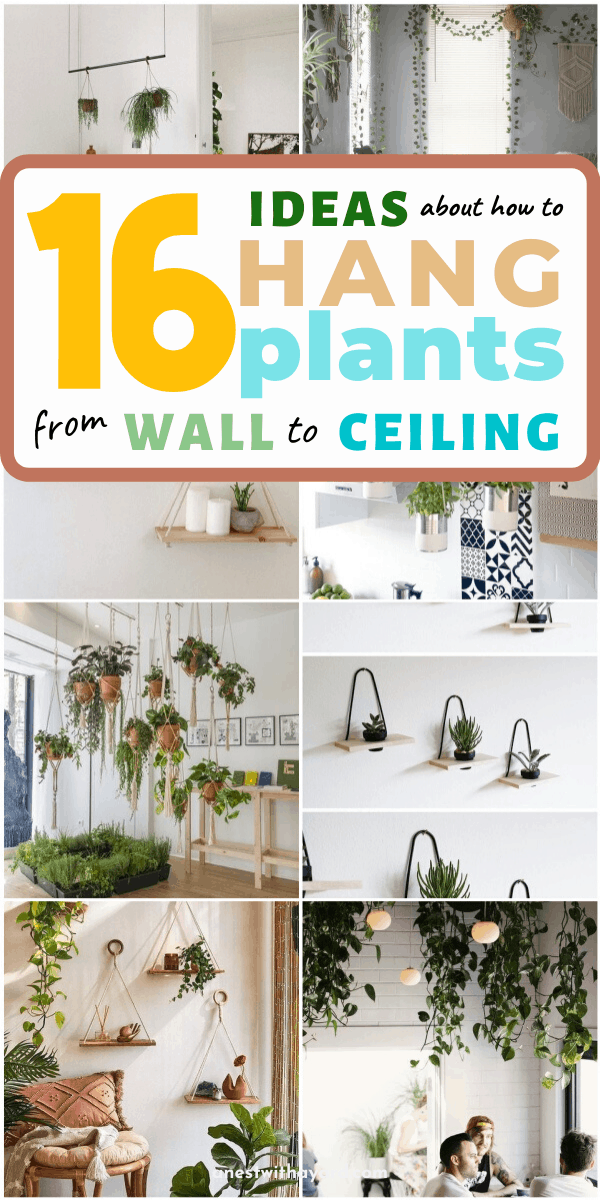 17 Ideas About How to Hang Plants From Ceiling and Wall  #ceiling #indoorGardenIdeas #indoorgardendesigns #indoorgardenapartment #apartmentindoorgarden #apartmentgardening #plants