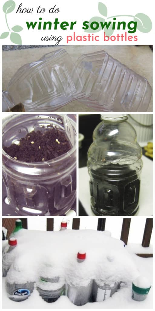 Winter sowing using plastic bottles #garden #gardening #gardenTips #winter #sowing #diy