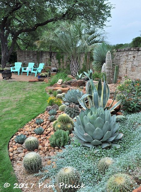 Agave and cactus splendor in the garden
