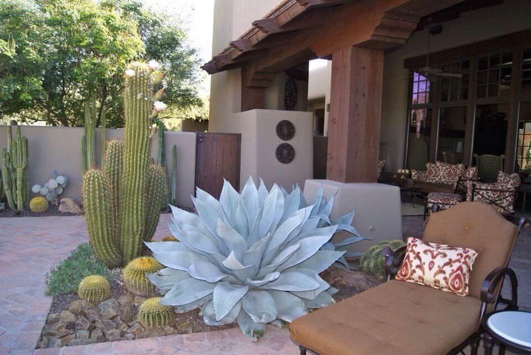 cacti garden on an outdoor living space