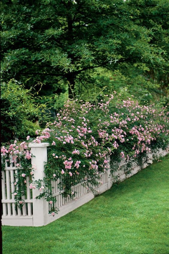 White picket fence and  flowering pants