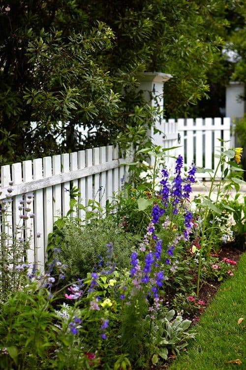White picket fences on the front yard  garden