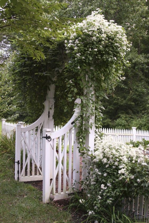 vintage arched arbor with flowering bushes and white picket
