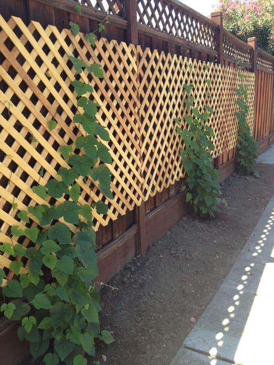 lattice wooden panel with a solid fence