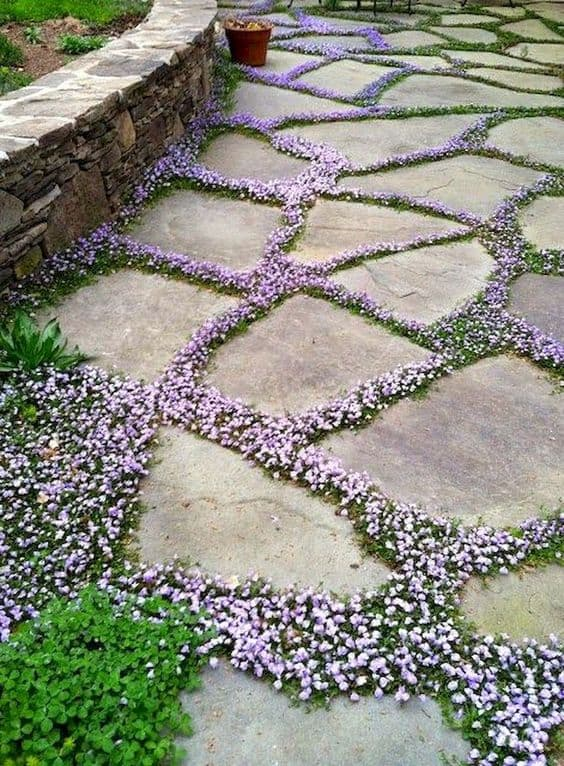 stones walkway with tiny flowering plants in between stones  #steppingStones #flowers  #walkway #Hardscaping #backyardLandscaping #backyardLandscapingIdeas #landscaping #cheapLandscapingIdeas #backyard #landscaping #curbAppeal