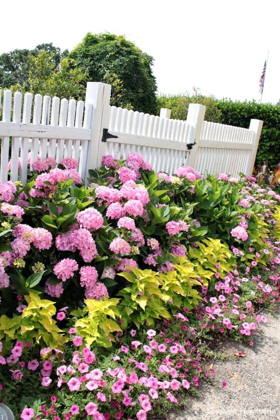 white picket with pink flowering plants