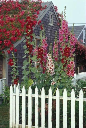 house with a flowering bush plants on the roof and white picket fence