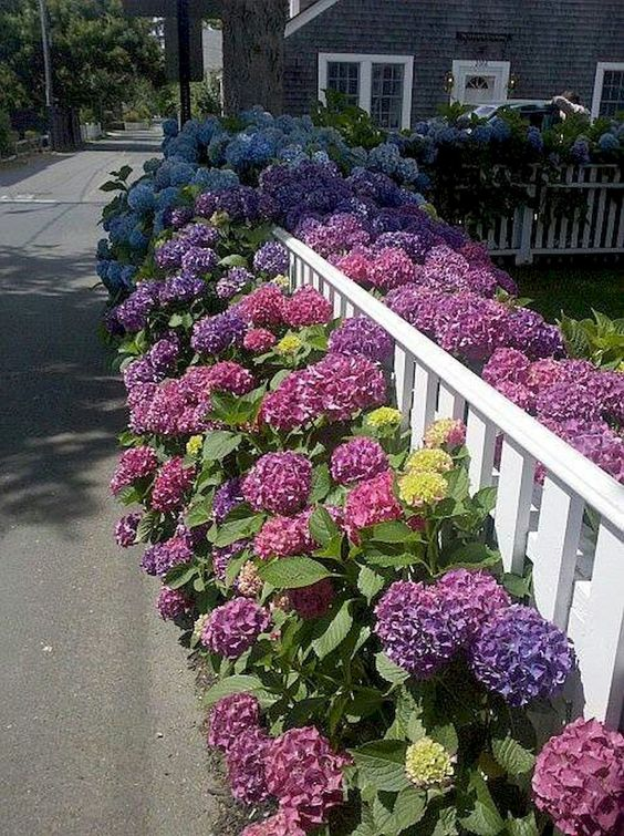 colored flowers covering a small, yet elegant white fence