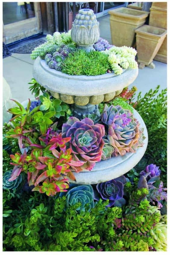 succulents inside the fountain  #flowers #containers #planters #gardenplanters #garden #backyardLandscaping #backyardLandscapingIdeas #landscaping #cheapLandscapingIdeas #backyard #landscaping #curbAppeal