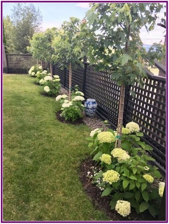 trees on the fence edges and flower on the trees base  #trees #fence #gardenfence #gardenfenceideas #privacyfenceideas #privacyfence #privacylandscape#backyardLandscaping #backyardLandscapingIdeas #landscaping #cheapLandscapingIdeas #backyard #landscaping #curbAppeal