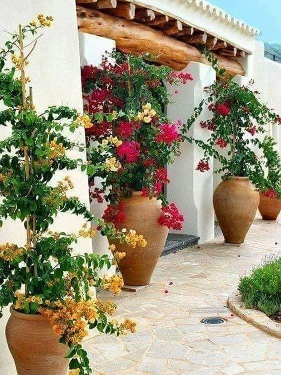 tall vases for tall flowering plants  #flowers #containers #planters #gardenplanters #garden #backyardLandscaping #backyardLandscapingIdeas #landscaping #cheapLandscapingIdeas #backyard #landscaping #curbAppeal