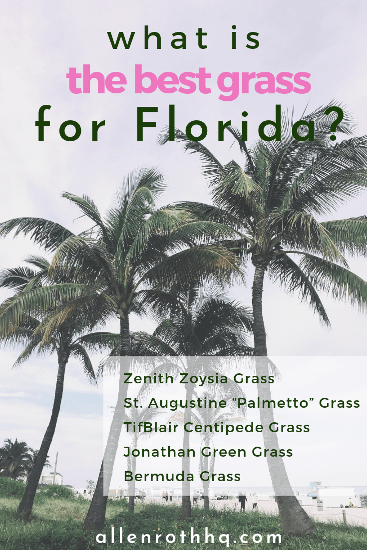 What is the best grass for Florida? Check out  5 kinds #grass #lawn #backyardLandscaping #backyardLandscapingIdeas #landscaping