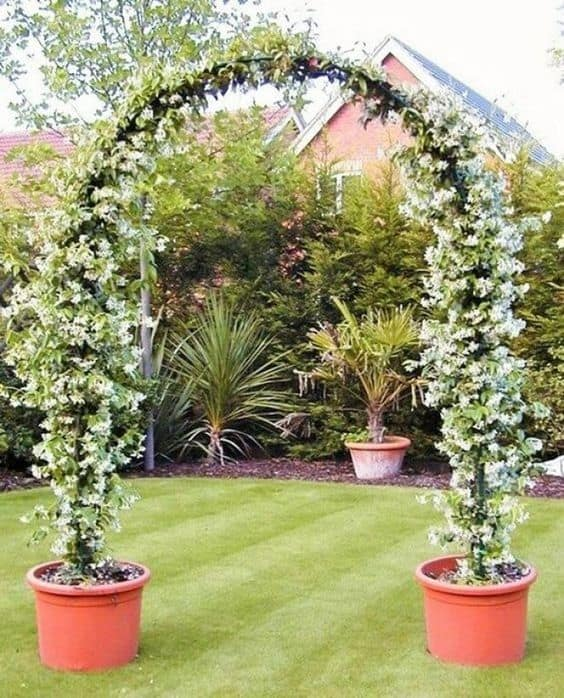 climbing potted plant that creates an archway  #flowers #containers #planters #gardenplanters #garden #backyardLandscaping #backyardLandscapingIdeas #landscaping #cheapLandscapingIdeas #backyard #landscaping #curbAppeal