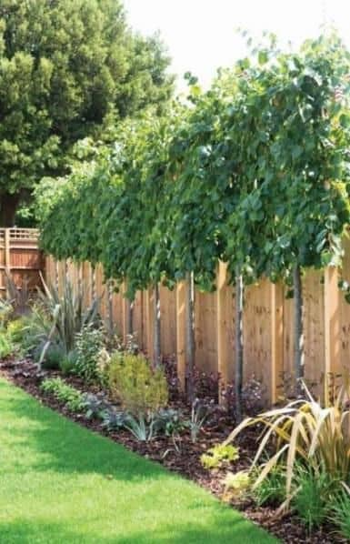 plants and trees along the fence edge  #trees #fence #gardenfence #gardenfenceideas #privacyfenceideas #privacyfence #privacylandscape#backyardLandscaping #backyardLandscapingIdeas #landscaping #cheapLandscapingIdeas #backyard #landscaping #curbAppeal