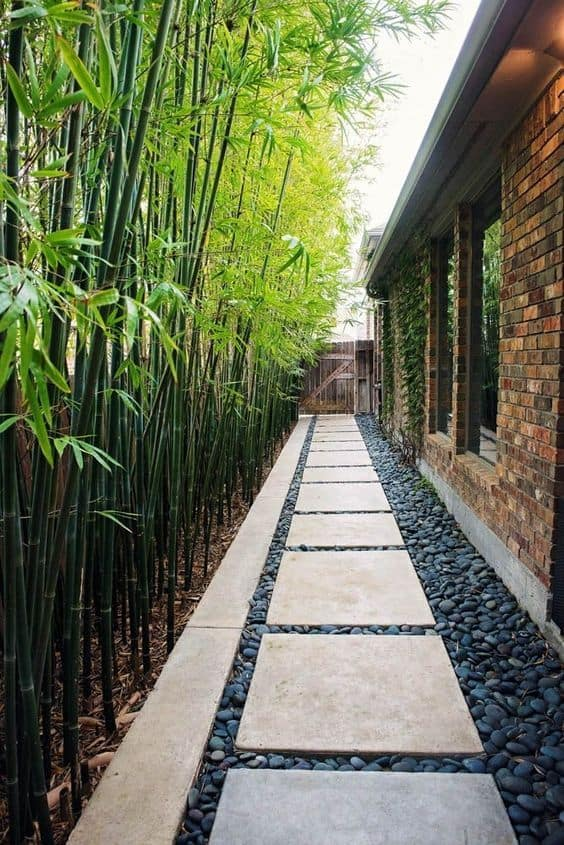 backyard stepping stones walkway and bamboo plants as a fence  #steppingStones #Hardscaping #walkway #backyardLandscaping #backyardLandscapingIdeas #landscaping #cheapLandscapingIdeas #backyard #landscaping  #curbAppeal