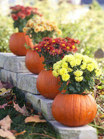 flower pot pumpkin #walkway #pathway #fall #autumn #garden #backyardLandscaping #backyardLandscapingIdeas #landscaping #cheapLandscapingIdeas #landscape #outdoorSpace #backyard #backyardDecor #outdoordecor #pumpkins #mums