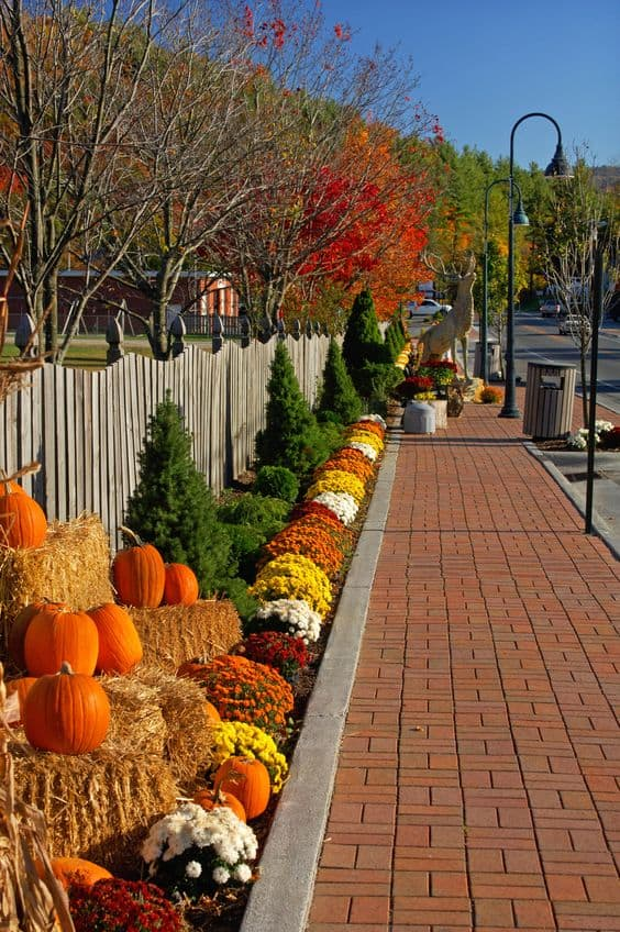 Red brick sidewalk with a festive pumpkin fall arrangement #walkway #pathway #fall #autumn #garden #backyardLandscaping #backyardLandscapingIdeas #landscaping #cheapLandscapingIdeas #landscape #outdoorSpace #backyard #backyardDecor #outdoordecor #pumpkins #mums