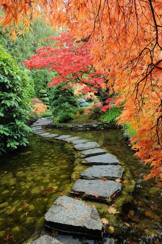 stone pathway for a garden riverbed #walkway #pathway #fall #autumn #garden #backyardLandscaping #backyardLandscapingIdeas #landscaping #cheapLandscapingIdeas #landscape #outdoorSpace #backyard #backyardDecor #outdoordecor #steppingStones #leaves #trees #pond