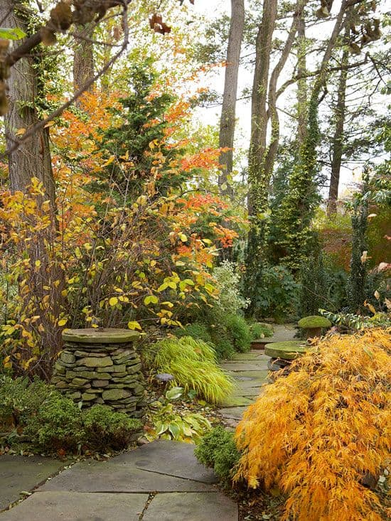 garden with big trees #walkway #pathway #fall #autumn #garden #backyardLandscaping #backyardLandscapingIdeas #landscaping #cheapLandscapingIdeas #landscape #outdoorSpace #backyard #backyardDecor #outdoordecor #trees