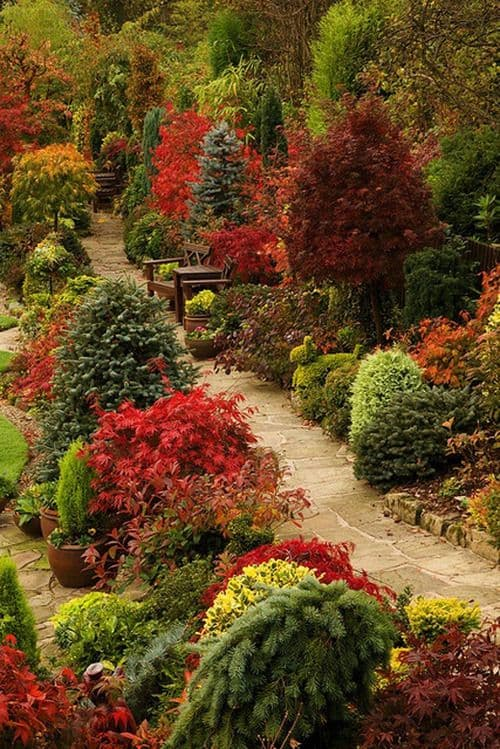 dwarf trees in different colors for a garden #walkway #pathway #fall #autumn #garden #backyardLandscaping #backyardLandscapingIdeas #landscaping #cheapLandscapingIdeas #landscape #outdoorSpace #backyard #backyardDecor #outdoordecor #trees