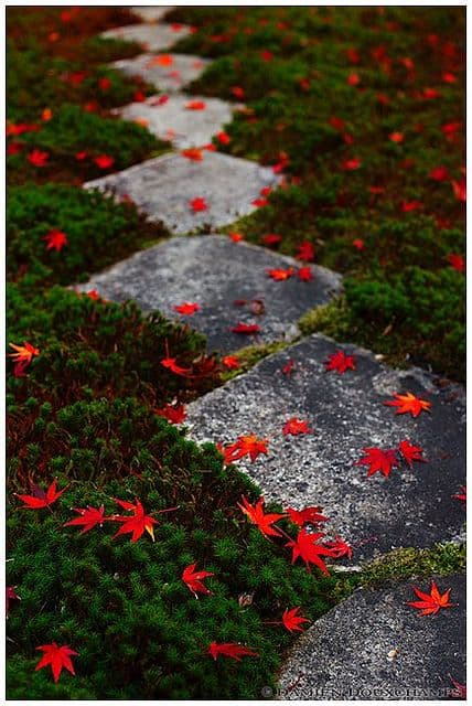 Bright Red Leaves On Paving #walkway #pathway #fall #autumn #garden #backyardLandscaping #backyardLandscapingIdeas #landscaping #cheapLandscapingIdeas #landscape #outdoorSpace #backyard #backyardDecor #outdoordecor #steppingStones #leaves