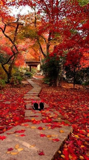concrete garden pathway and leaves on the ground #walkway #pathway #fall #autumn #garden #backyardLandscaping #backyardLandscapingIdeas #landscaping #cheapLandscapingIdeas #landscape #outdoorSpace #backyard #backyardDecor #outdoordecor #steppingStones #leaves #trees