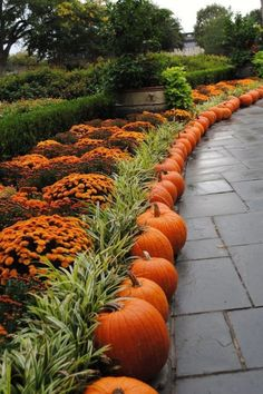 pumpkin lined up on the garden's edge #walkway #pathway #fall #autumn #garden #backyardLandscaping #backyardLandscapingIdeas #landscaping #cheapLandscapingIdeas #landscape #outdoorSpace #backyard #backyardDecor #outdoordecor #pumpkins #mums