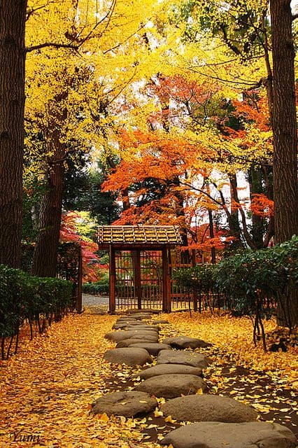 stone entry path with fallen leaves #walkway #pathway #fall #autumn #garden #backyardLandscaping #backyardLandscapingIdeas #landscaping #cheapLandscapingIdeas #landscape #outdoorSpace #backyard #backyardDecor #outdoordecor #steppingStones #leaves #trees