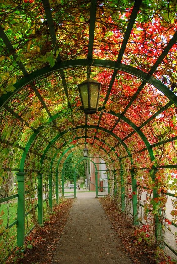 Tunnel garden pathway #walkway #pathway #fall #autumn #garden #backyardLandscaping #backyardLandscapingIdeas #landscaping #cheapLandscapingIdeas #landscape #outdoorSpace #backyard #backyardDecor #outdoordecor #pergola #vines