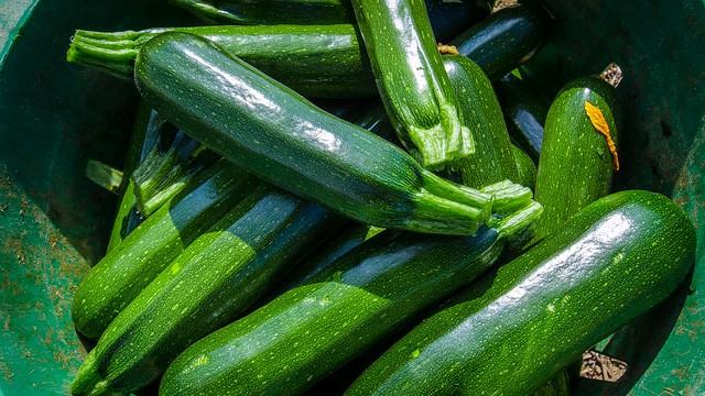 zuccinis #gardenTools #garden #gardening #gardenTips #gardencare #backyardGarden  #vegetables #zuccini #zucchini