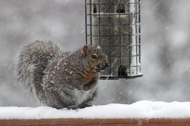 squirrel near a bird feeder