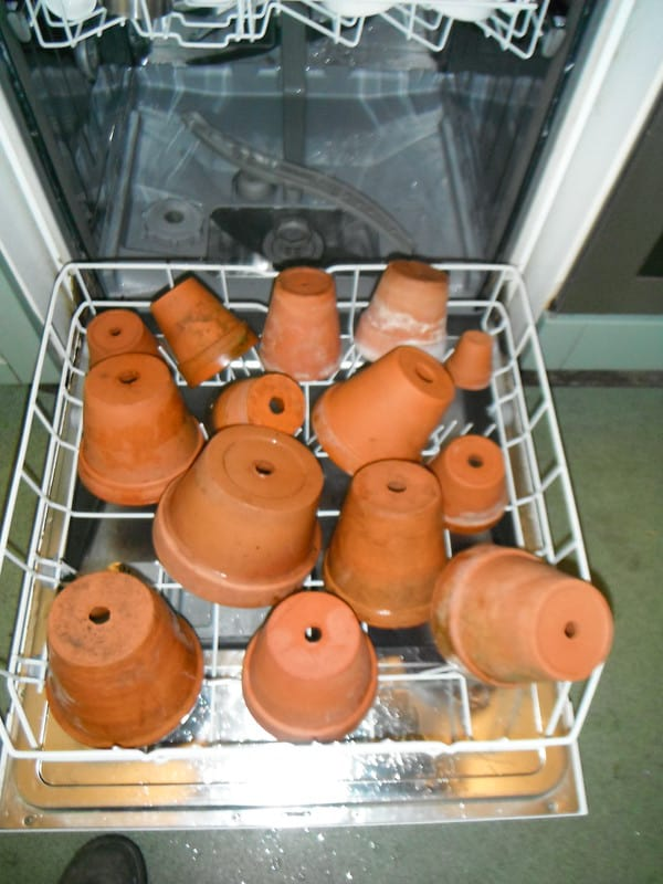 Baking the pots in an oven