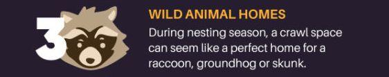 Wild animal nest