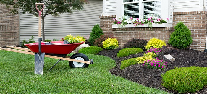 A lawn with a berm with beautiful plants planted on it and a wheel barrow and a shovel propped upright on the grass
