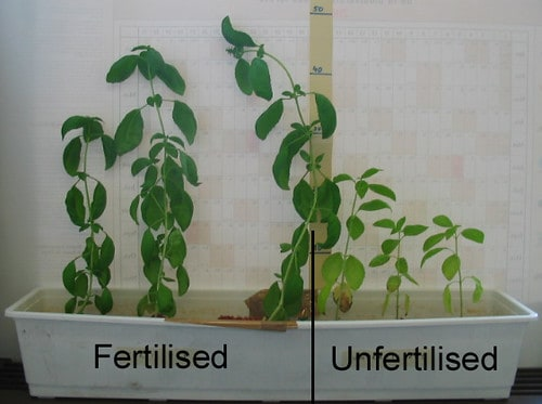 Fertilized vs. Unfertilized