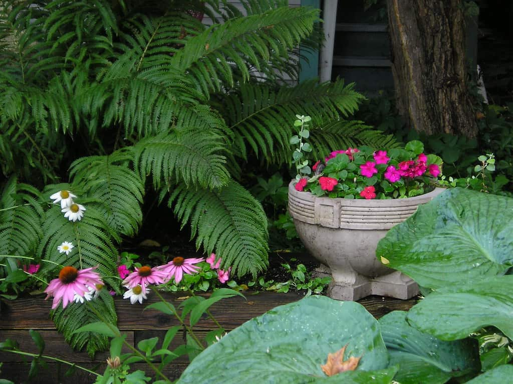Ferns and flowers liven up your garden