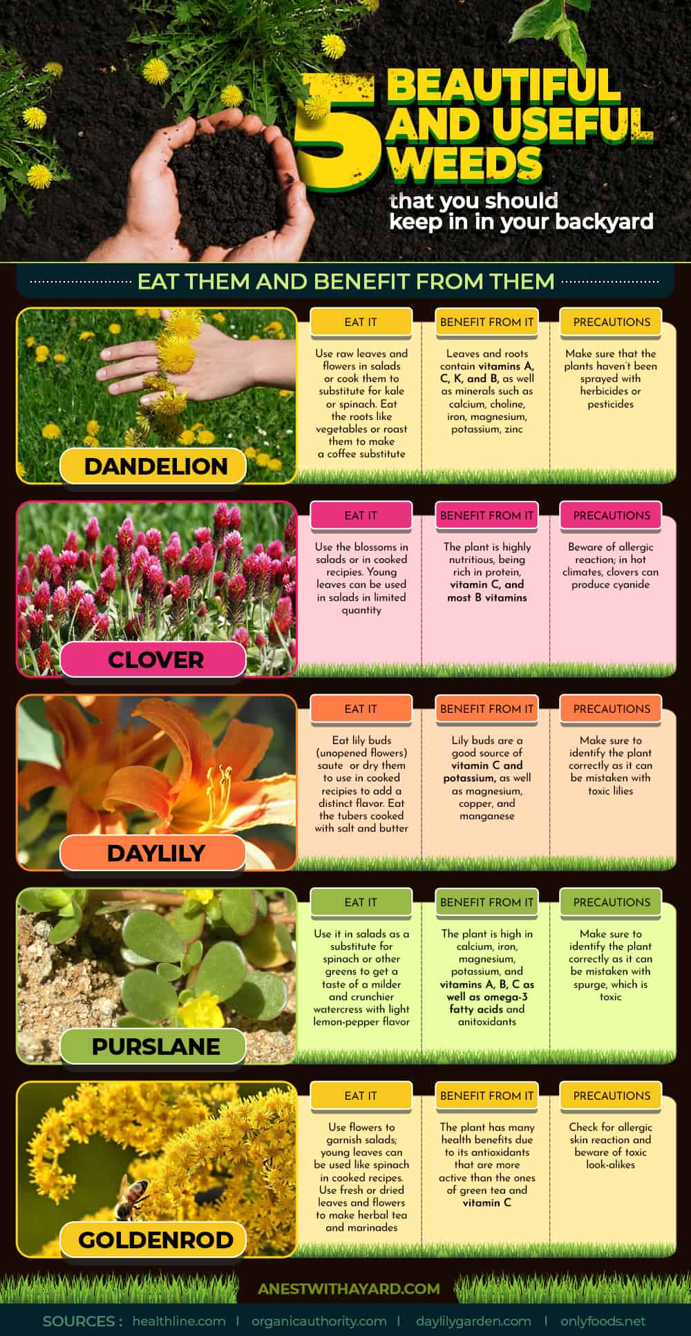 Here's 5 beautiful and useful weeds that you should keep in your backyard. Eat them and benefit from them! Also, these weeds attract bees #garden #backyard #infographic #lawn #weeds #flowers #landscaping #bees #backyardLandscaping