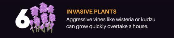Aggressive vines
