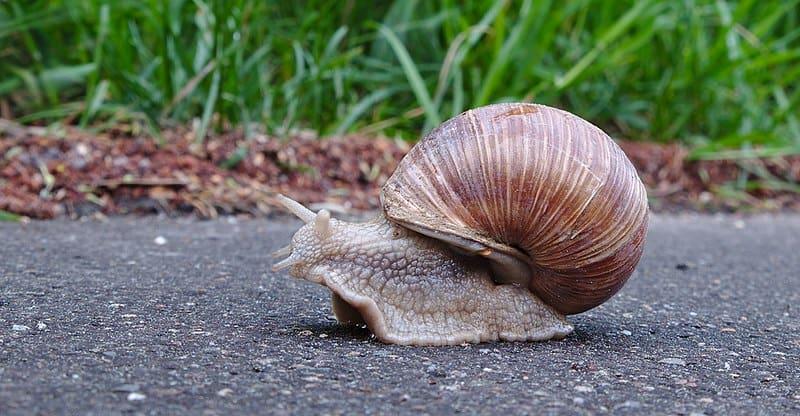 Slug on the pavement