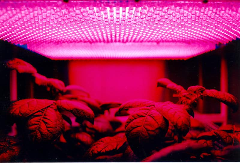 Purplish grow lights