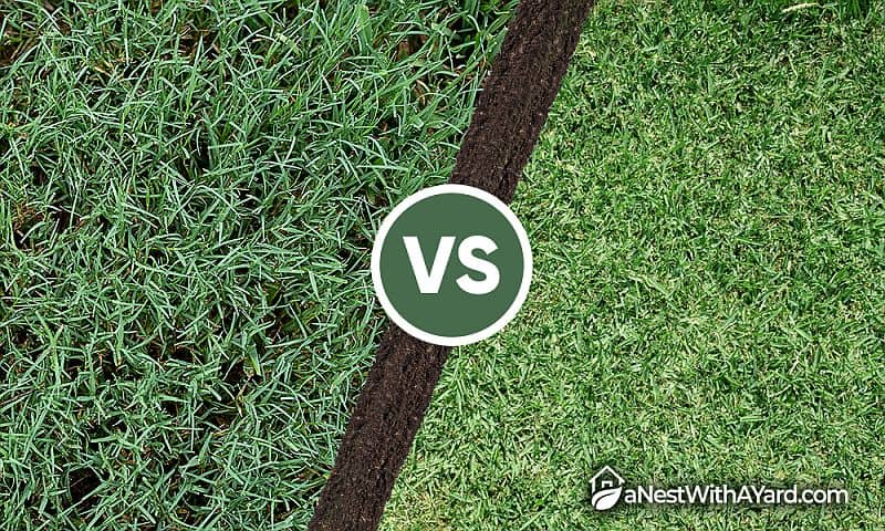 Bermuda Grass Vs St. Augustine Grass: What's The Difference?