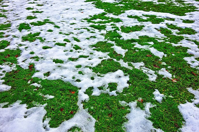 Can You Use A Snowblower On Grass? Here's What You Need To Know