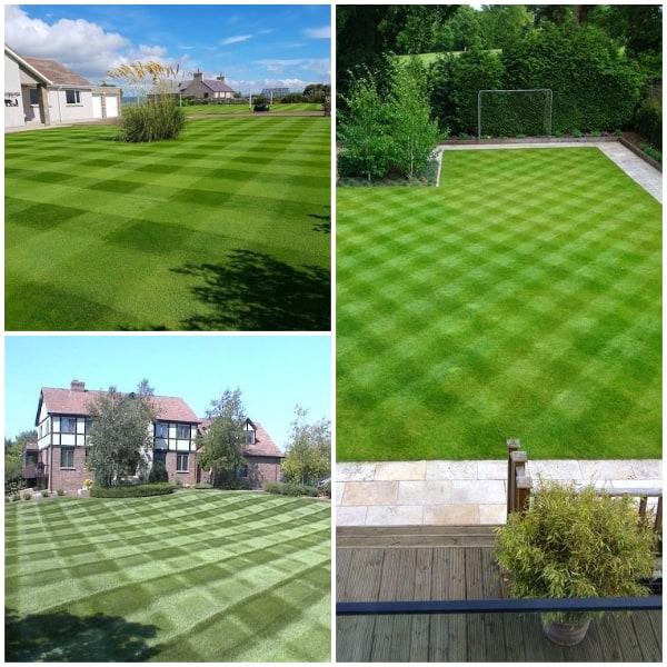 Checkered Lawn Pattern