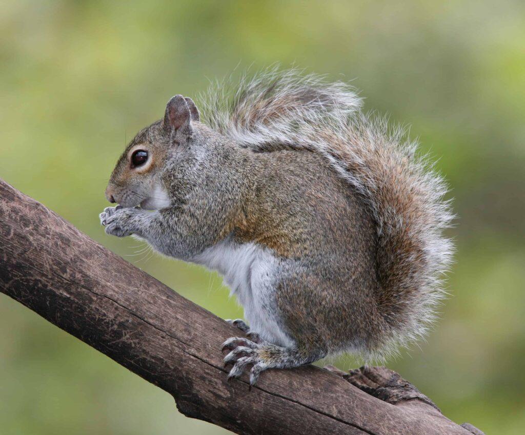 A cute little squirrel