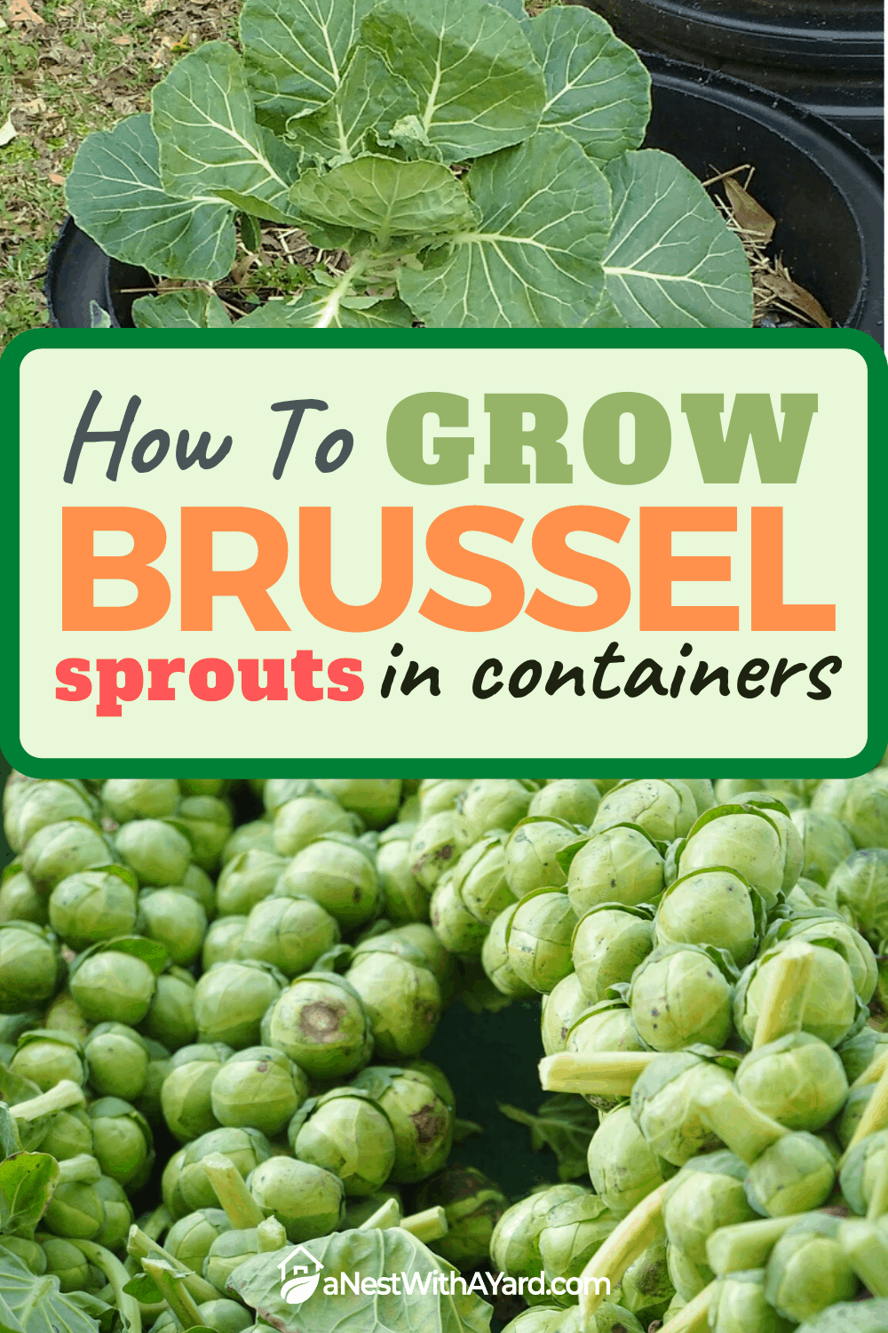 How to Grow Brussel Sprouts in Containers