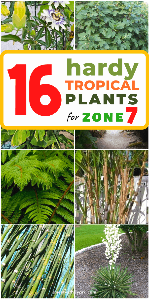 Some of the most beautiful hardy tropical plants for zone 7 to plant in your garden #gardening #flowers #garden #zone7 #backyardLandscaping #backyardLandscapingIdeas #landscaping #cheapLandscapingIdeas #landscape