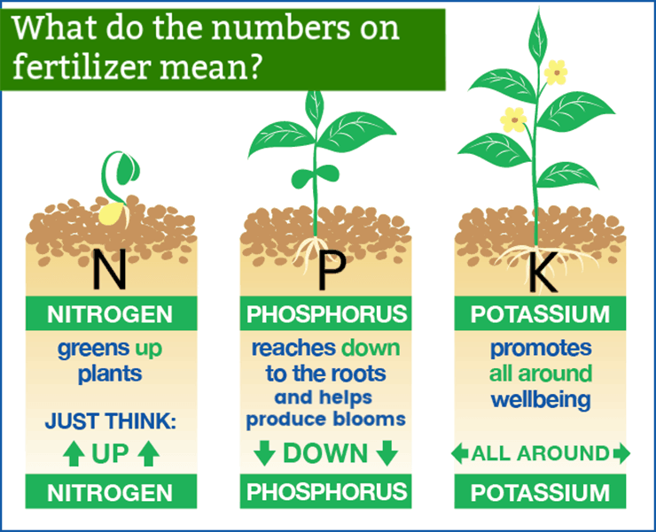 Diagram of how 3npk fertilizer benefits plants