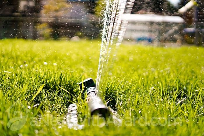 How Long To Leave Sprinkler On? All You Need To Know