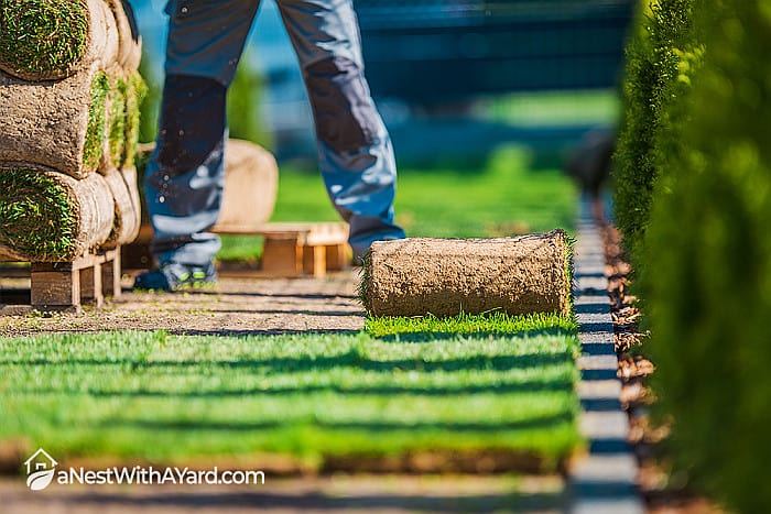 How To Overseed Lawn Without Aerating: All You Need To Know